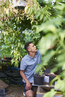 Young man harvesting