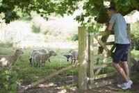 Full length of young man looking at sheep