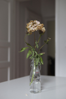 Dried flowers in vase at home