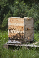 Bees on beehive at farm