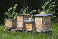 Row of beehives at field