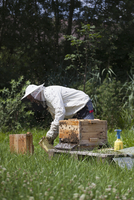 Male beekeeper working on bee hives at farm