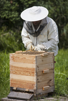 Male beekeeper examining bee hive on field