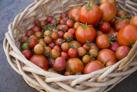 High angle view of fresh tomatoes in wicker basket