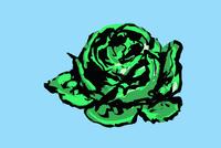 Illustration of cabbage on blue background
