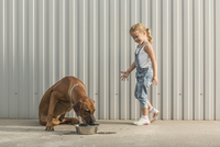 Happy girl looking at dog feeding in container against corrugated wall