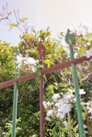 Low angle view of fence and trees against sky