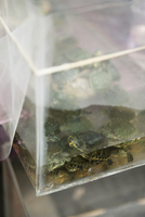 High angle view of turtles in container