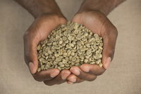 High angle view of raw coffee beans in cupped hands at table