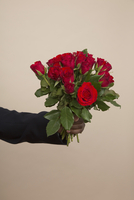 Cropped hand holding roses against colored background