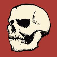 Illustration of human skull against red background