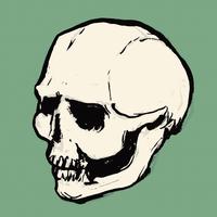 Illustration of human skull against green background