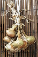 Bunch of onions hanging on wooden fence
