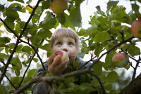 Low angle view of girl holding apple on tree