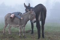 Portrait of girl lying on donkey at field in foggy weather