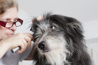 Female vet examining dog's ear in clinic