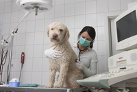 Young veterinarian examining dog in medical clinic