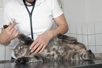 Midsection of vet examining cat at table in clinic