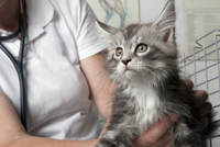 Midsection of vet holding cat in clinic