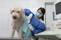Female veterinarian examining dog on table in hospital