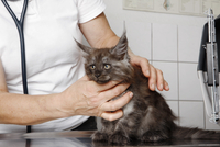 Midsection of vet examining cat's neck at table in clinic