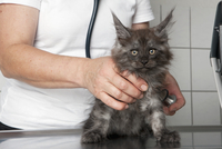 Midsection of vet examining cat in clinic