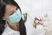 Female veterinarian cleaning dog's teeth in clinic