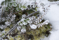 Close-up of frost covered plants on field