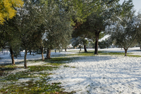 Trees on field in park during winter