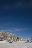 Scenic view of blue sky over snow covered trees on mountain