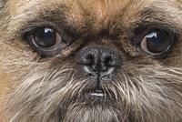 Full frame shot of dog