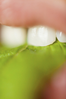 Extreme close-up of woman eating leafy vegetable