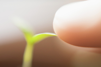 Extreme close-up of finger touching seedling