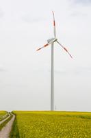 Wind turbine on oilseed field against sky