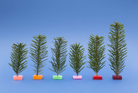 Variety of small Christmas trees on blue background