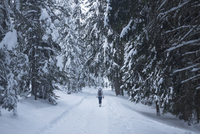 Rear view of woman walking on snow covered field amidst trees, Val di Fiemme 11016033241| 写真素材・ストックフォト・画像・イラスト素材|アマナイメージズ
