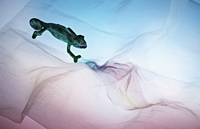 High angle view of lizard on fabric
