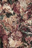 Full frame shot of seaweed