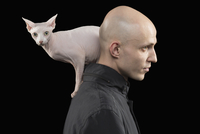 Profile view of bald man carrying Sphynx hairless cat on shoulder against black background 11016033716| 写真素材・ストックフォト・画像・イラスト素材|アマナイメージズ