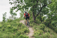Rear view of man riding mountain bike on dirt track up hill
