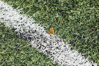 High angle view of butterfly on soccer field