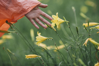 Cropped image of hand touching wet yellow flowers during rainy season