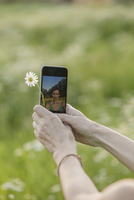 Cropped image of hands holding flower and smart phone with reflection of herself on it