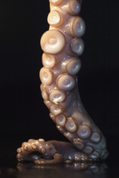 Close-up of fresh octopus tentacle on table against black background
