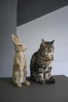 Tabby cat sitting by rabbit figurine on floor against wall 11016034556| 写真素材・ストックフォト・画像・イラスト素材|アマナイメージズ