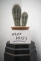 Cactus in pot with sign against wall