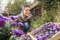Happy woman planting purple flowers in back yard