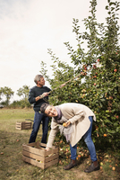 Cheerful couple picking apples in orchard
