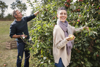 Happy couple picking apples from tree in orchard 11016034748| 写真素材・ストックフォト・画像・イラスト素材|アマナイメージズ
