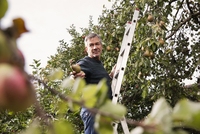 Low angle view of man standing on ladder offering pear in orchard 11016034753| 写真素材・ストックフォト・画像・イラスト素材|アマナイメージズ